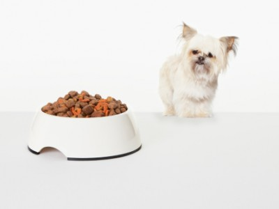 Dog Food: What Not to Feed