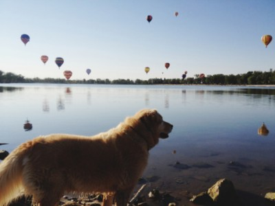 hot-air-balloons-and-dogs-a-surprising-menace_edistep.png