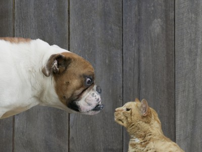 How to Introduce Dogs and Cats