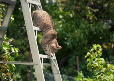 New Study Investigates Outdoor Cats as Potential Environmental