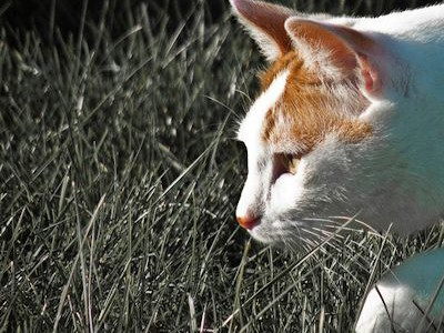 Op-Ed: Getting Rid of Cats Does Not Preserve Wildlife