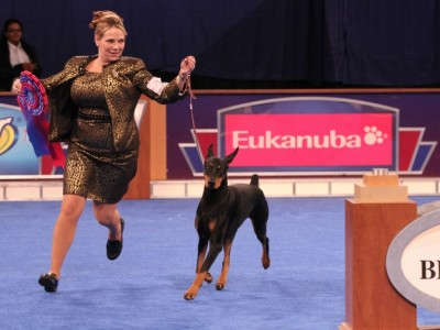 relive-the-excitement-watch-the-akceukanuba-dog-show-on-tv_edistep.png