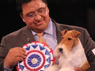 Sky, a Wire Fox Terrier, Named Best in Show at the 2012 AKC/Eukanuba National Championship